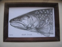 Framed Bull Trout Lithograph